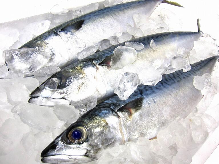 アニサキスが発見されやすい魚